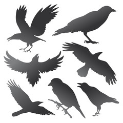 Crow Silhouettes