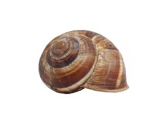 ordinary home garden snail