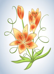 Lily flower illustration - florist, gardening, arranging