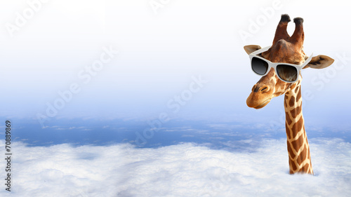Plexiglas Giraffe Funny giraffe with sunglasses coming out of the clouds