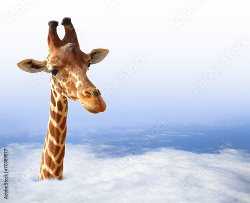 Keuken foto achterwand Giraffe Funny giraffe with coming out of the clouds
