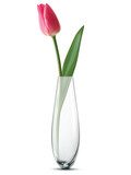 Fototapety Tulip in a vase, isolated. Vector illustration
