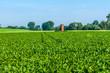 canvas print picture - Landwirtschaft-Rübenfeld
