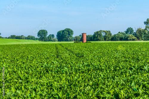 canvas print picture Landwirtschaft-Rübenfeld