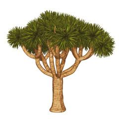 Joshua Tree , .yucca tree, Joshua Tree