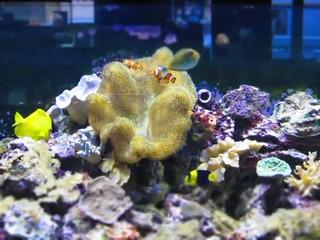 time lapse aquarium