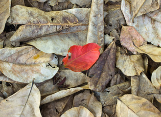 Brown and red fallen leaves laying on the ground.