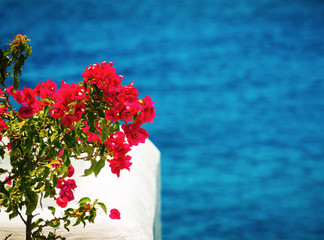 Beautiful red flower on white balcony in mediterranean sea.