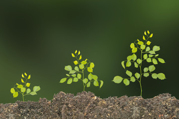 Saplings on soil