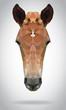 Horse head vector isolated geometric modern illustration