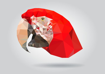 Macaw Parrot head vector isolatet geometric illustration