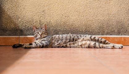 Cat lying stretched and resting