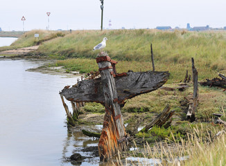 Seagull perched on a Boat wreck