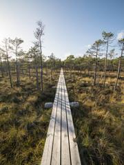 wooden footbridge in the bog