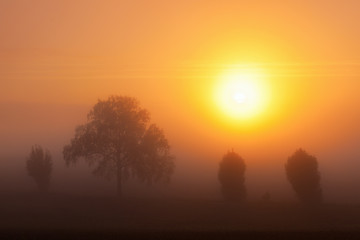 Misty sunrice