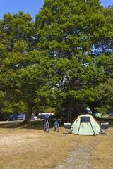 Green camping tent in a woodland camp site