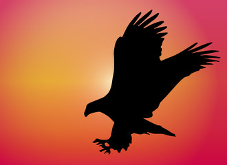 Flying Eagle Sunset