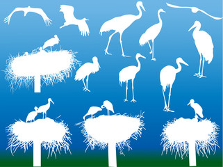 storks and on blue background