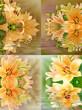 Kwitnące lilie