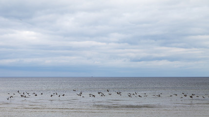 Ducks and sea.
