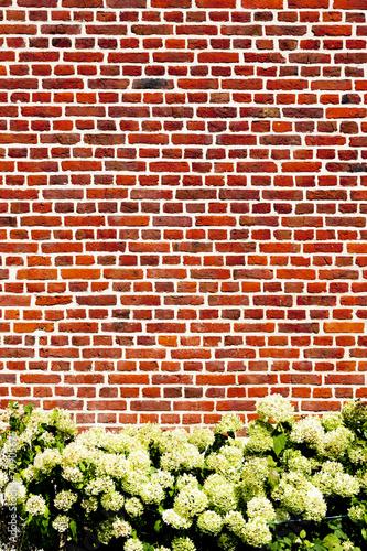 canvas print picture Blumen vor Backsteinwand