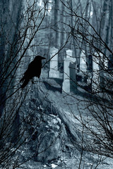 old gravestones and black raven