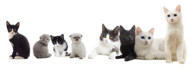 cats look
