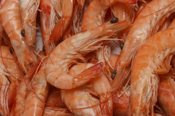 Fresh Prawns (Shrimps) seafood