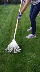 Frau beim rächt den Rasen