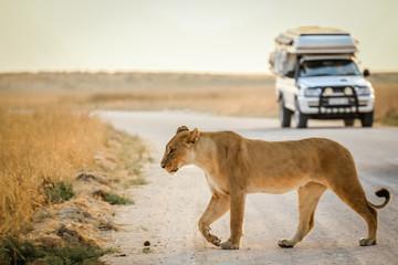 african safari © daskleineatelier