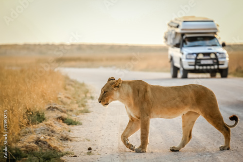 Foto op Canvas Afrika african safari