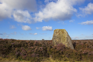 ancient monolith in heather