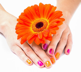 Women's hands with orange gerbera flower