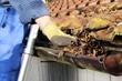 Dachrinne wird von Laub gesäubert - 70911452
