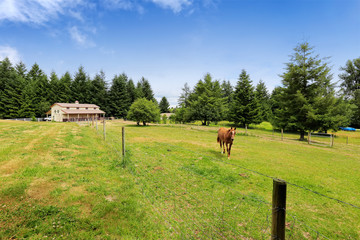 Horse walking on large farm field with a barn