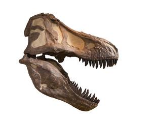 Tyrannosaurus skull isolated on white