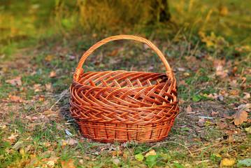 basket in autumn forest
