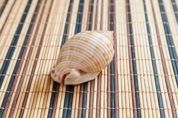 Sea shell, mollusks, gastropods