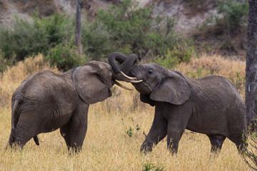 ELEPHANT IN SERENGETI
