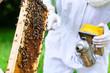 Obrazy na płótnie, fototapety, zdjęcia, fotoobrazy drukowane : Imker mit Smoker kontrolliert Bienen und Waben