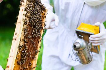 Imker mit Smoker kontrolliert Bienen und Waben