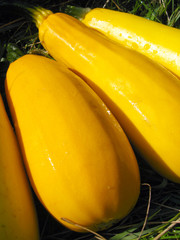 yellow squashes