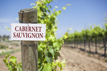 Cabernet Sauvignon Sign On Vineyard Post