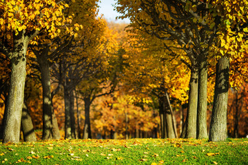 Picturesque sunny autumn park background.