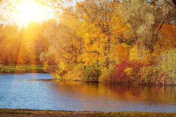 Autumn Landscape. Sunny park in fall.