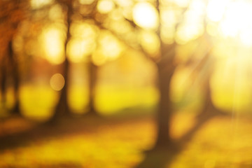 Bokeh blurry sunny autumn park background.