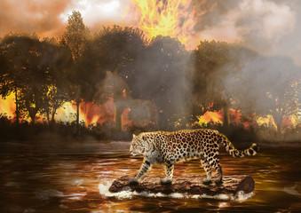 Fugindo do Fogo
