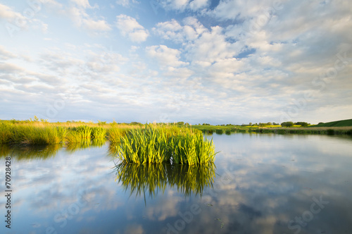 Spoed canvasdoek 2cm dik Iris Kwitnące Kwiaty irysów wodnych w jeziorze