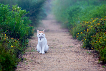 cat sitting on a footpath