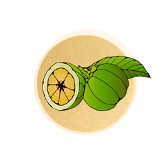 East Asian Garcinia Cambogia Weight Loss Product